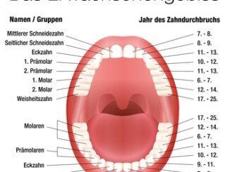 Wie viele Zähne hat ein Mensch? Das Erwachsenengebiss im Detail